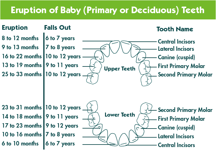 Baby teeth by jeremy bliss of bliss dental shannon childcare how to look after your babys teeth ccuart Gallery